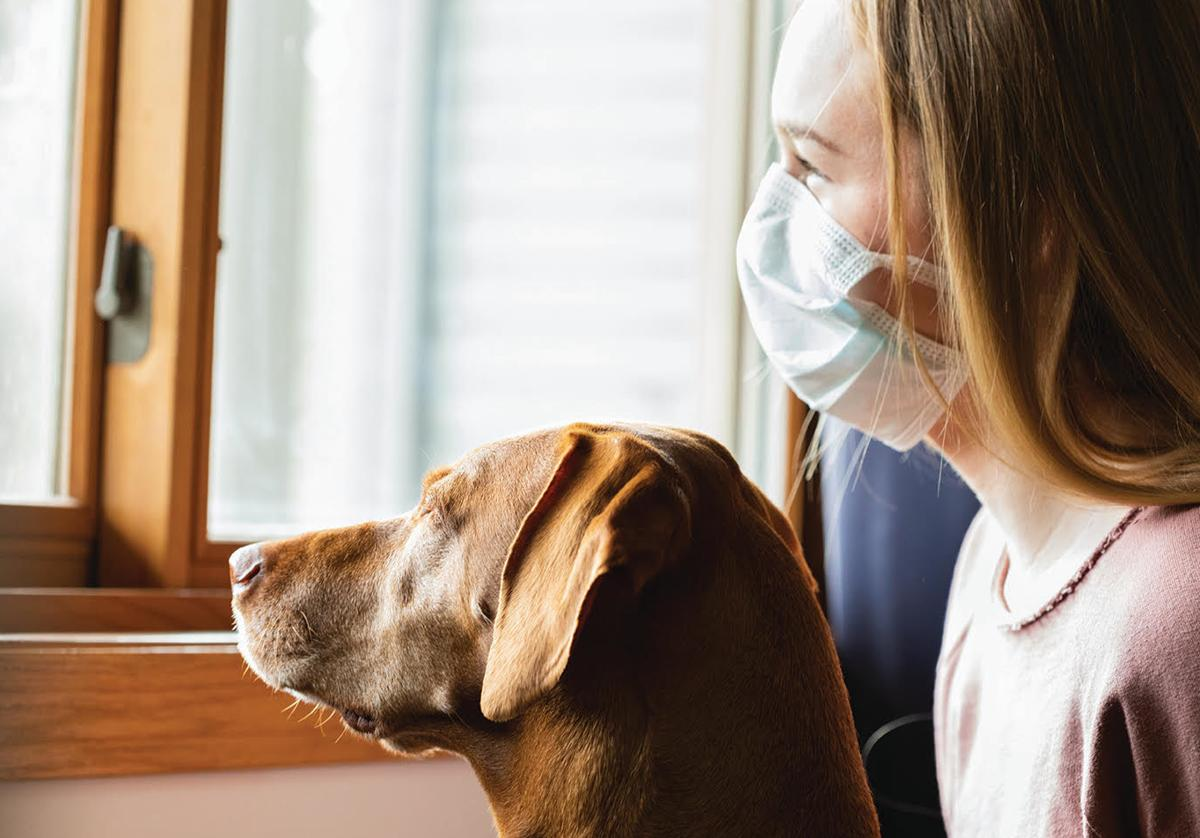 What do Mental Health and Pet Adoption Rates during the Pandemic Have in Common?